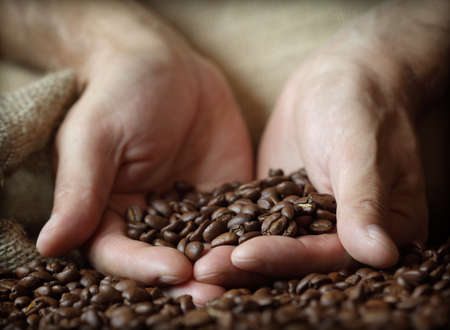 grano de cafe: Fresh granos de café tostado saliendo de las manos ahuecadas en un saco de arpillera Foto de archivo