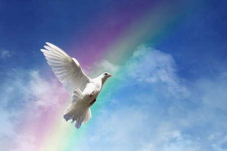 雲および虹の自由、平和、精神の概念に対して飛ぶ白い鳩