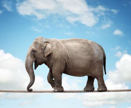 solucion de problemas: Elehant equilibrio sobre una cuerda floja concepto de riesgo, conquistando la adversidad y el logro