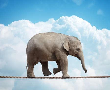 Elehant kalf balanceren op een koord concept voor risico, veroveren tegenspoed en prestatie