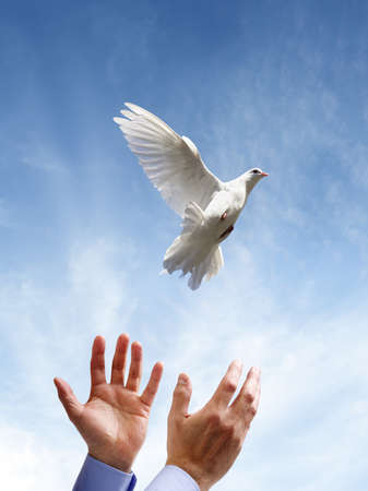 Releasing a white dove into the air concept for freedom, peace and spirituality Standard-Bild