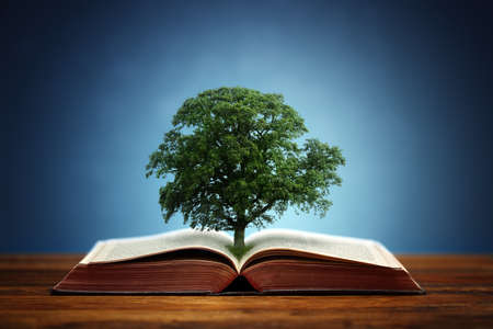 new books: Book or tree of knowledge concept with an oak tree growing from an open book