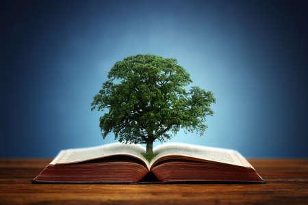 Buchen oder Baum der Erkenntnis Konzept mit einer Eiche wächst aus einem offenen Buch