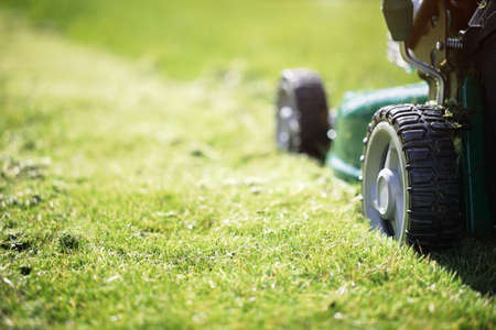 mow: Mowing or cutting the long grass with a green lawn mower in the summer sun