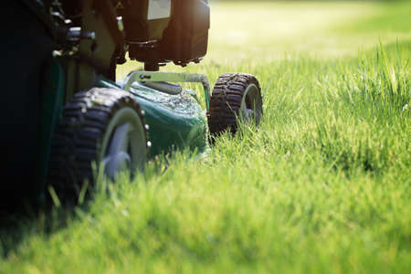cut grass: Mowing or cutting the long grass with a green lawn mower in the summer sun