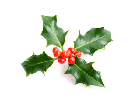 christmas decorations with white background: Christmas holiday holly decoration isolated on white background