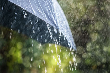 rainy: Rain drops falling from a black umbrella concept for bad weather, winter or protection