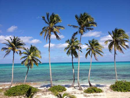 Bahamas Beach and Palms Trees