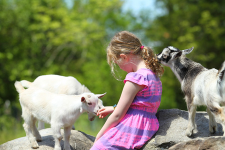 Girl and Her Beloved Goats at Farm