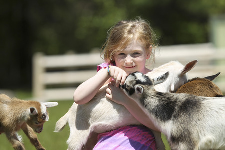 baby goat: Seven-Year girl and baby goats at the farm.