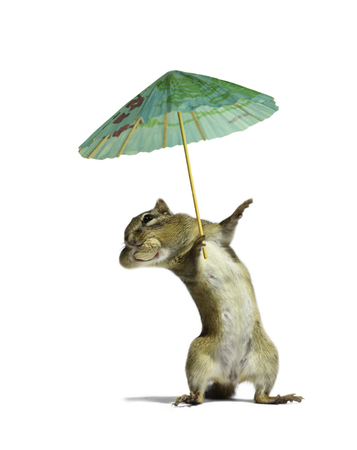 ardilla: A chipmunk holding umbrella