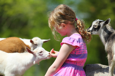 Seven-Year girl and baby goats. Фото со стока