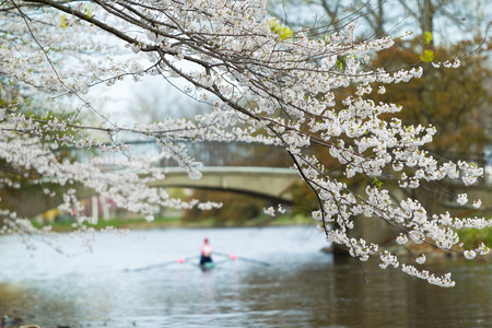A woman is rowing in the spring. Stock Photo