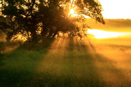 Tree with sun rays in the summer morning 版權商用圖片