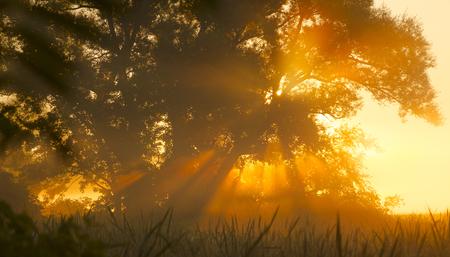 Summer Early Morning Tree Fog 版權商用圖片