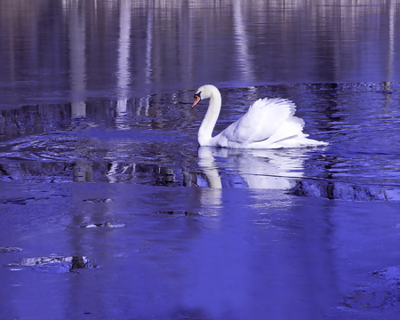 Swan on frozen lake Stok Fotoğraf - 118200501