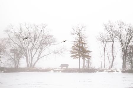Ducks flying over foggy lake in winter
