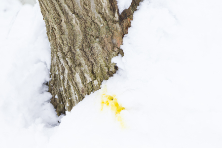 Dogs urine on white snow in winter