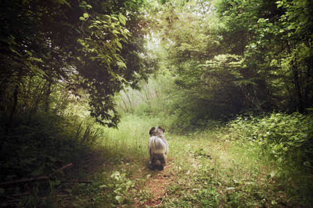 dreamlike: a small dog looks bring along a pathway in the forest, the scenery is a dreamlike and magical scenery