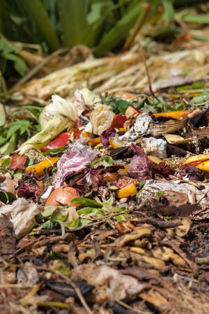 Bio waste. Organic waste with pieces of lemons, onions and others fruits in decomposition. Stock Photo