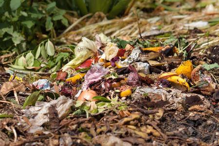 desechos organicos: Residuo org�nico. Biorresiduos con piezas de huevos, cebollas y otras frutas en descomposici�n.