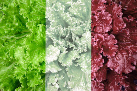 lactuca: Italian flag of lettuce, fresh food green, white and red Stock Photo