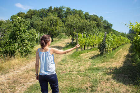 Vineyard with lady, young woman shows the growing of grapes in summer days Stock Photo
