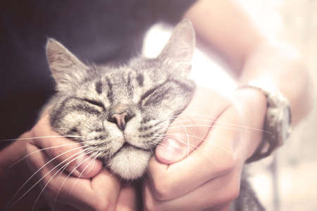 beautiful cat in human hands, vintage effect love for the animals