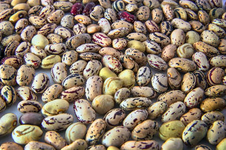 top view of borlotti beans, a lot of legumes Archivio Fotografico