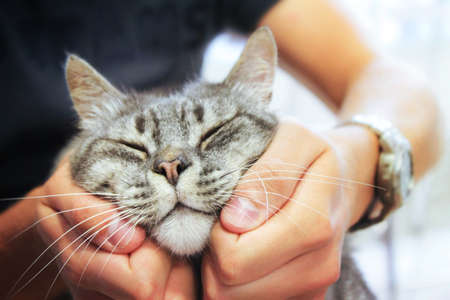 pleased cat in human hands, love for the animals