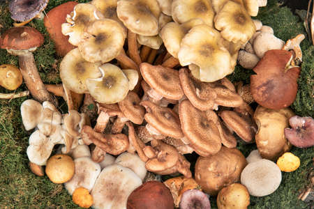 Traditional italian mushrooms. Top view of delicious food