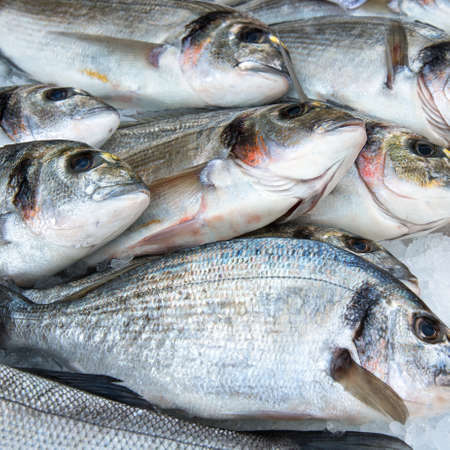 squared picture of fishes, fresh seabass sold in a market