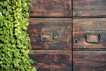 Old wooden door with ivy. Ancient building overgrown with green leaves