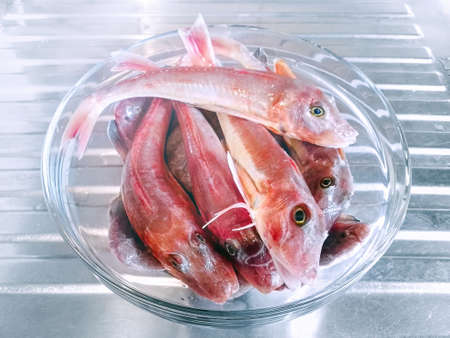 Red tub gurnard. Fish in a glass bowl on a steel kitchen table Фото со стока