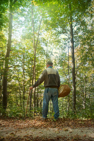 man in the wood with basket, back view of middle-aged person in the forest (He's looking for mushrooms)