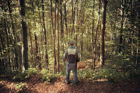 man in autumn forest with basket, back view of senior in the woods looking the wild nature