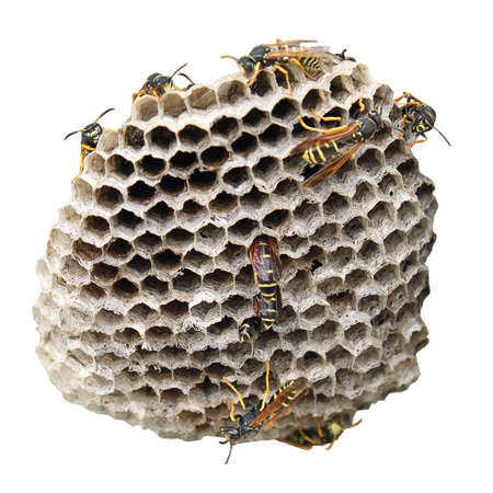 hornet nest on white background. Some insects are on it