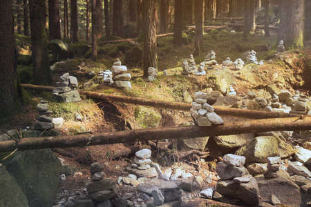 forest with balanced stones, many stack rocks in a woods of picea abies