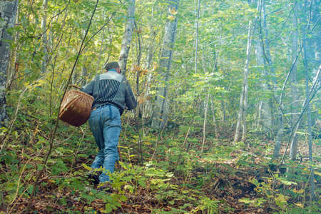 Looking for mushrooms in the wild forest, man has a wicker basket to collect natural products in the woods Фото со стока