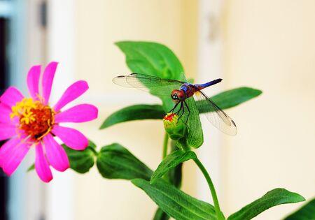 vegetate: Dragonfly