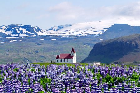 Landelijk dorpskerk omringd door sneeuw geplateerd bergen en paarse en witte berg lupine  Stockfoto