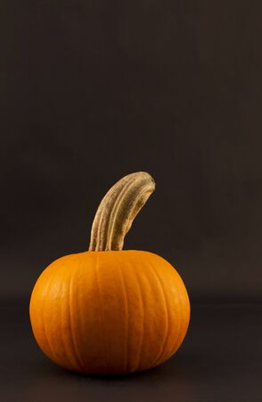 Single, simple fresh pumpkin with arched stem against black background in vertical orientation with copy space above; photo