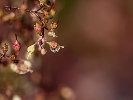 Water droplet sparkles on foliage and twigs turning autumn hues Stock Photo