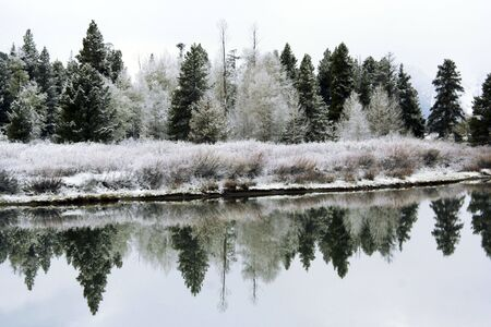 oxbow bend: Powder dusting of snow on evergreens and decidious trees along the Snake River at Oxbow Bend in Grand Teton National Park, Wyoming, USA Stock Photo
