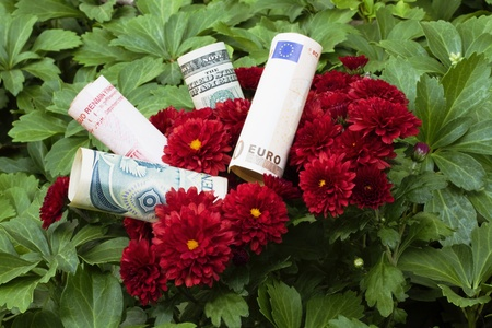 diversification: Modern financial blossoms have to be global and diversified; multiple currencies nestled in red flowers are diversified financial blooms; business plans and personal financial plans with global diversification;