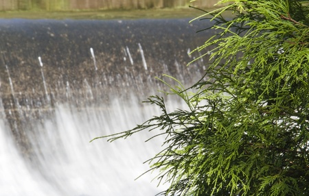 currents: Fresh rain brings swift currents over waterfalll; evergreen in foreground;
