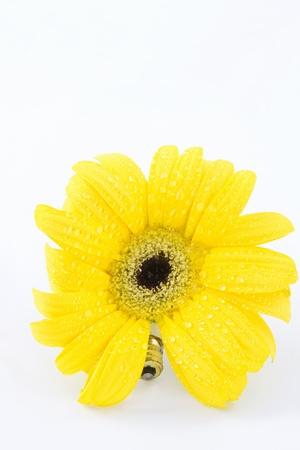iniciativas: Gotas de agua dulce en daisy amarillo con base de tornillo de bombilla de luz el�ctrica se conecta la naturaleza y las necesidades del hombre en una imagen de nuevas iniciativas ambientales; fondo blanco;