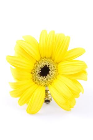 enchufe de luz: Daisy de girasol-como se muestra con luz el�ctrica socket screw cap como tallo para conectar el concepto de uso el�ctrico con el medio ambiente de las necesidades; fondo blanco;