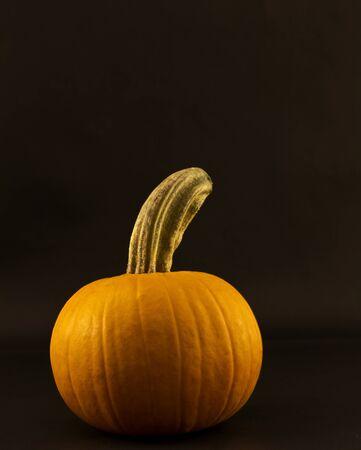 single, orange pumpkin is off set to left against dark background with copy space above; 版權商用圖片