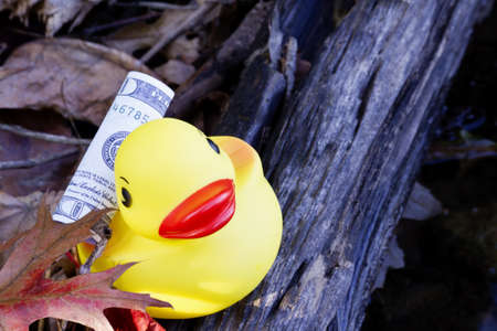 suggests: Dollar currency on back of yellow, rubber ducky suggests cash floats away and hits shore; will it be found or lost?   Stock Photo